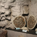 archeologische vondsten in Boekenbergpark @The Park